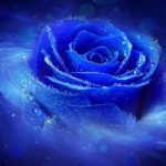 Profile picture of Winter Rose